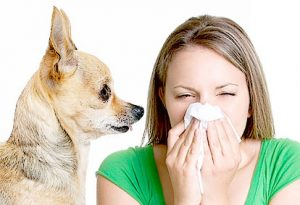 allergy-shots-for-dogs