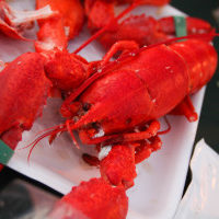 rp_lobster-allergy-300x200.jpg
