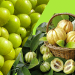 Alleric Reactions to Garcinia Cambogia