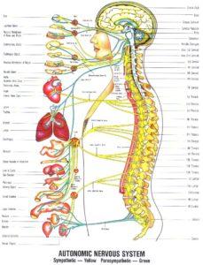 autonomic-nervous-system stress